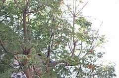大きな木も植えられています。(2013-10-28,共用部,OTHER,1F)