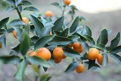 金柑や柿、山椒などが植えられています。(2016-01-05,共用部,OTHER,1F)