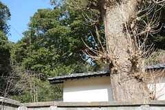 庭の裏のある山は、万葉集で詠まれた有名なスポットだとか。(2016-01-05,共用部,OTHER,1F)