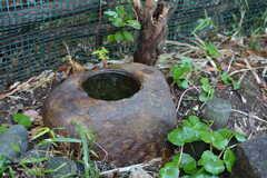 玄関と庭に手水鉢があります。(2020-01-08,周辺環境,ENTRANCE,1F)