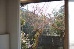 バスルームの窓からは庭のしだれ梅が見えます。(2020-01-08,共用部,BATH,1F)