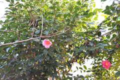 部屋の前に椿が咲いています。(102号室)(2020-01-08,専有部,ROOM,1F)