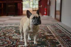 事業者さんの愛犬が一緒に暮らしています。(2017-03-14,共用部,LIVINGROOM,2F)