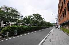 鶴岡八幡宮へ続く参道。(2011-06-13,共用部,ENVIRONMENT,1F)