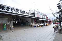 若宮大路の農連。新鮮な鎌倉野菜が買えます。(2015-01-28,共用部,ENVIRONMENT,1F)
