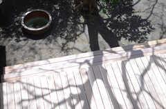 夏になれば、立派な木陰となりそうです。(2013-04-05,共用部,OTHER,2F)