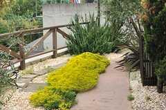 玄関脇の小道。様々な種類のグリーンが植えられています。(2014-05-27,周辺環境,ENTRANCE,1F)