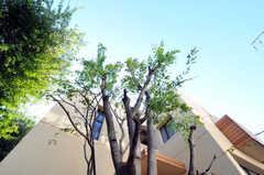 玄関前の木々。(2010-11-10,共用部,OTHER,2F)