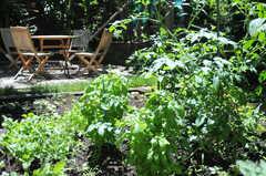 入居者さんが育てている野菜やハーブ。トマトやバジルもあります。(2011-07-17,共用部,OTHER,1F)