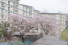 窓からは桜が見られます。(201号室)(2013-04-02,専有部,ROOM,2F)