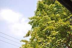 夏は緑がモッサモサです。(2013-08-22,共用部,OUTLOOK,1F)