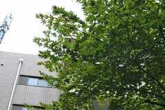 敷地内には大きな木があります。(2013-08-22,共用部,OUTLOOK,1F)