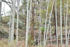 シェアハウスの周辺には竹林が何本もあり、たけのこも生えてくるそうです。(A棟)(2019-03-01,共用部,OTHER,2F)