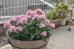 手入れがされた花が並んでいます。(2013-07-18,共用部,OTHER,1F)