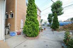 家の前の木は12月にクリスマスツリーになるのだとか。(2013-07-18,共用部,OTHER,1F)