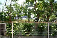 窓からの景色。隣地は畑です。(103号室)(2021-06-10,専有部,ROOM,1F)