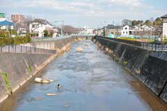シェアハウスと駅のあいだに流れる鶴見川。(2019-03-14,共用部,ENVIRONMENT,1F)