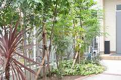 アプローチには緑がいっぱい。(2009-11-05,周辺環境,ENTRANCE,1F)