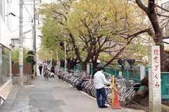 目の前には桜並木も。元住ざくらは有名なのだとか。(2009-11-05,共用部,ENVIRONMENT,1F)