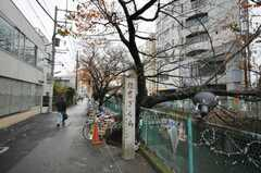 桜もキレイに咲くとの事。(2009-11-30,共用部,ENVIRONMENT,1F)