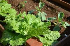 オーナーさんも栽培されているようで、獲れたての野菜を楽しめます。(2014-09-03,共用部,OTHER,1F)
