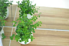 化粧台に置かれた観葉植物。(2013-07-26,共用部,OTHER,4F)