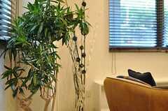 観葉植物が置かれています。(2013-10-28,共用部,LIVINGROOM,1F)