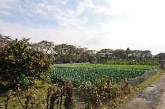 シェアハウス前の畑。のどかです。(2012-11-13,共用部,ENVIRONMENT,1F)