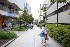 小田急小田原線・新百合ヶ丘駅近くの緑道。シェアハウス周辺は大きな戸建の多い高級住宅街です。(2016-08-03,共用部,ENVIRONMENT,1F)