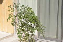 玄関の前には植物が。(2017-02-13,周辺環境,ENTRANCE,1F)