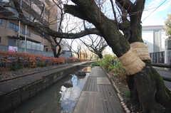 川沿いを散歩することもできます。(2008-12-10,共用部,ENVIRONMENT,1F)