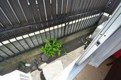 庭の様子。(101号室)(2014-08-06,専有部,ROOM,1F)