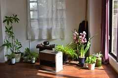 窓辺の観葉植物。冬期間のみ一時避難場所として置かれています。(2013-02-20,共用部,OTHER,1F)