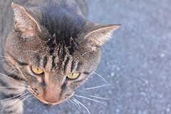 近所の人懐っこいネコ。何匹かいるようです。(2016-09-27,共用部,ENVIRONMENT,1F)