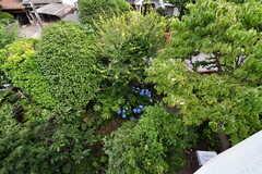 ベランダから見た庭の様子。(号室)(2017-06-22,専有部,ROOM,2F)