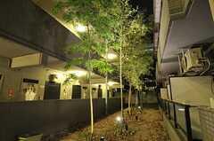 夜は竹がライトアップされます。(2014-03-06,共用部,OTHER,1F)