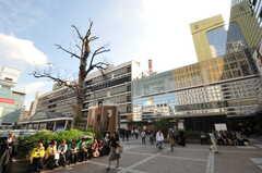 各線・横浜駅の様子。(2011-11-28,共用部,ENVIRONMENT,1F)