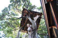 下から見たツリーハウス。(2012-05-16,共用部,OTHER,1F)