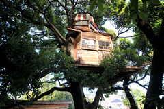 大きな木の上に乗っています。(2012-05-16,共用部,OTHER,1F)