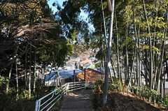 シェアハウスの近所には竹藪もあります。(2011-01-25,共用部,ENVIRONMENT,1F)