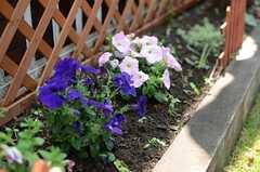 花壇も入居者の方は自由に使えるそうです。(2014-04-24,共用部,OTHER,1F)