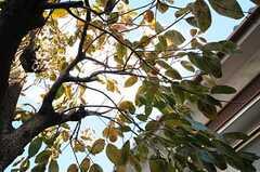 玄関前には柿の木が生えています。(2011-11-21,共用部,OTHER,1F)
