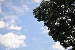 ワサワサと大きな木に囲まれています。(2013-08-27,共用部,OTHER,2F)
