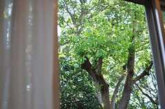 窓から見える景色。(103号室)(2013-08-27,専有部,ROOM,1F)
