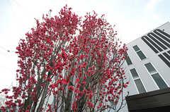 敷地内は花や木々が多く育っています。(2014-04-01,共用部,OTHER,1F)