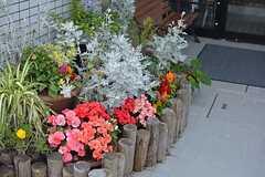 エントランスには花がたくさん植えられています。(2015-06-25,周辺環境,ENTRANCE,1F)