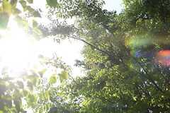 緑が生い茂っています。(2015-05-07,共用部,OTHER,1F)