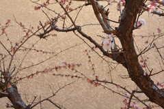 梅の花が咲いています。(101号室)(2019-03-15,専有部,ROOM,1F)