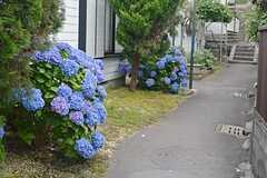 近所にはあじさいがたくさん咲いています。(2015-06-16,共用部,ENVIRONMENT,1F)
