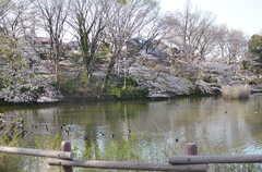菊名池公園には桜が咲きます。(2013-03-21,共用部,ENVIRONMENT,1F)
